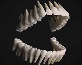 3D asset realtime Photorealistic human teeth