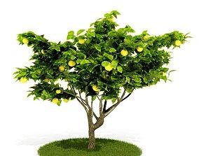3D Green Lemon Tree