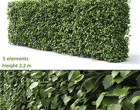 3D Crataegus Hedge 01