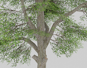 3D asset LOW-POLY GAME MODEL - TREE