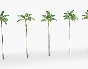 3D asset animated Florida Royal palm tree 01 - Low Poly