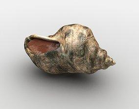 3D model Sea snail