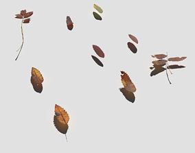 3D asset Dry Mountain Ash Leaves Pack