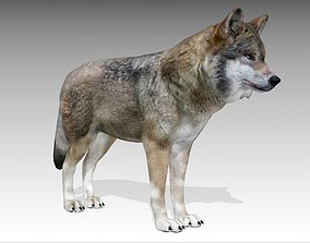 3D model animated Gray wolf