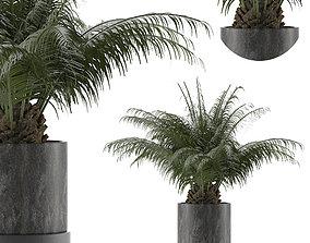 House Plant 32 3D