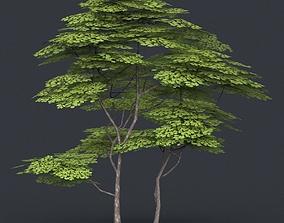 Low Poly Tree 14 3D asset