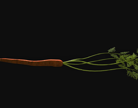 Carrot with Leaves 3D model