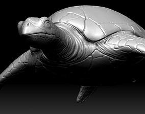 Sea Turtle Zbrush Model 3D