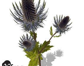 3D XfrogPlants Sea Holly