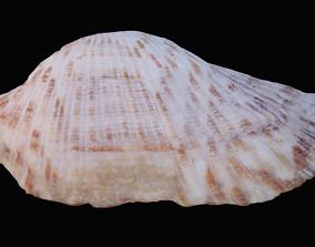 3D model Zebra Ark Sea Shell