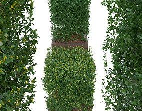 3D model Buxus the bush is in shape of cube