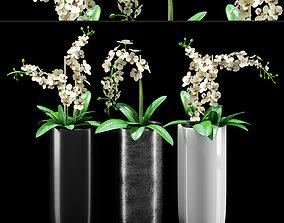 Plants 216 3D
