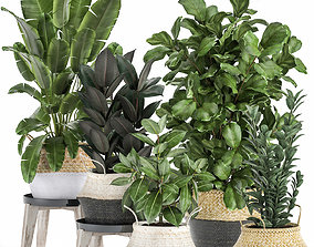 3D model Plants in rattan basket for the interior 874