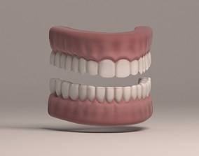Human Teeth and Gums 3D model