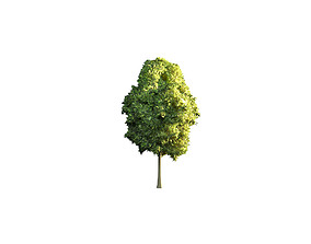 3D model VR / AR ready other Low Poly Tree Stylish