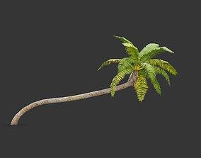 coconut palm 2 3D asset