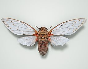 Cicada Pomponia Imperatoria Malaysia Insect 3D asset