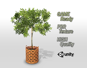 3D model Pot Plant Game Ready