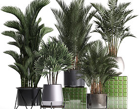 3D Collection of Exotic plants 352