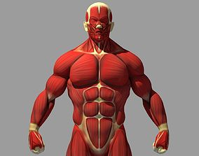 Muscle Anatomy Reference 3D