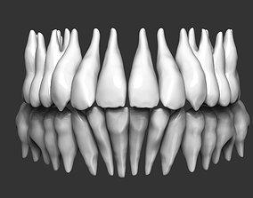 Human teeth 3D print model