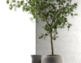 Outdoor Pots with Olive Tree 3D
