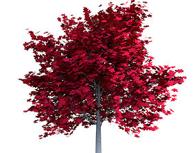 3D asset Red Maple Tree Acer Rubrum Low Poly 02