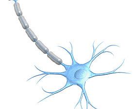 3D model Neuron