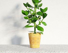 plant 43 am141 3D