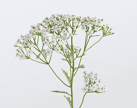 Yarrow Flower Bundle 3D