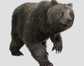 grizzly bear rig anim 3D