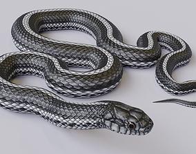 Animated Black White Snake 3D asset