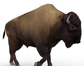 American Buffalo Animated 3D model
