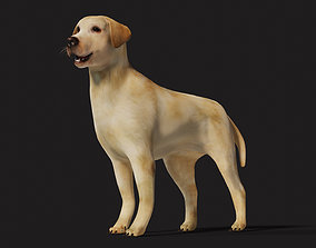 3D model VR / AR ready Labrador Dog Rigged with optional