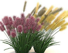 Cortaderia 3D model