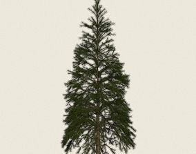 3D model Game Ready Conifer Tree 02