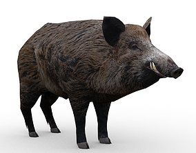 Wild boar Animated 3D asset