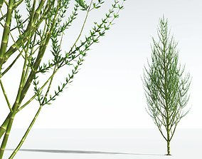 EVERYPlant Ridged Horsetail Tree 11 --12 Models--