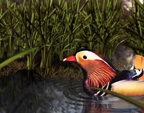 3D asset floating duck