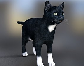 animated Cat poses 3d tabby
