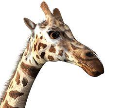 Giraffe Rigged 3D asset realtime