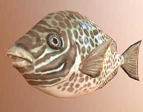 3D model siganus fish