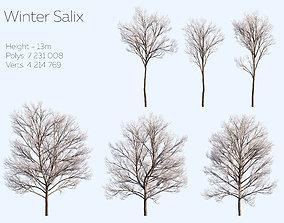 Winter tree Salix 3D