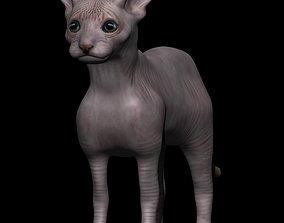 Sphynx Cat 3D asset