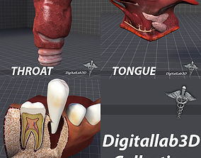 3D model Tongue Throat and Teeth Collection