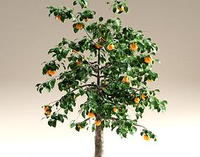 3D bark Orange tree