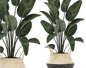 3D model Decorative plants 6