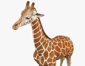 Giraffe wildlife 3D model VR / AR ready
