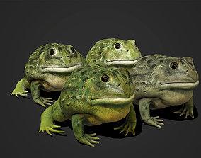 3D asset Pixie Frog