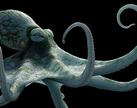3D model Octopus Cayman